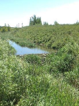 cd86 beaver dam