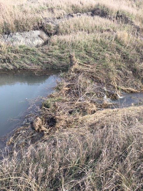 cd35 beaver dam