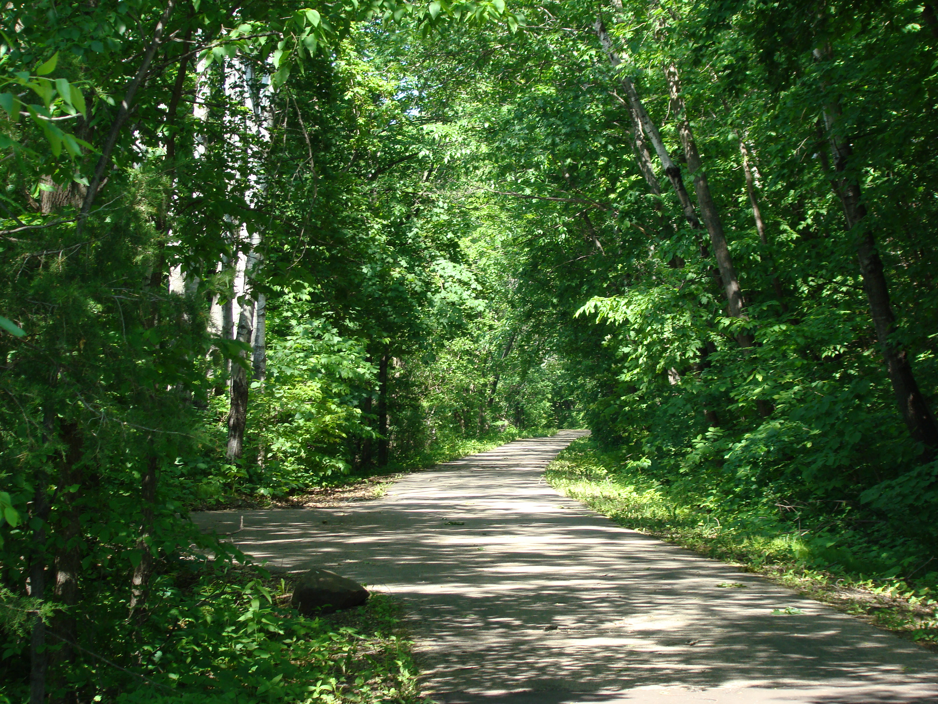 A view of the wooded Red Jacket Trail in Summer.